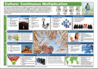 CULTURE.CONTINUOUS-MULTIPLICATION-CS